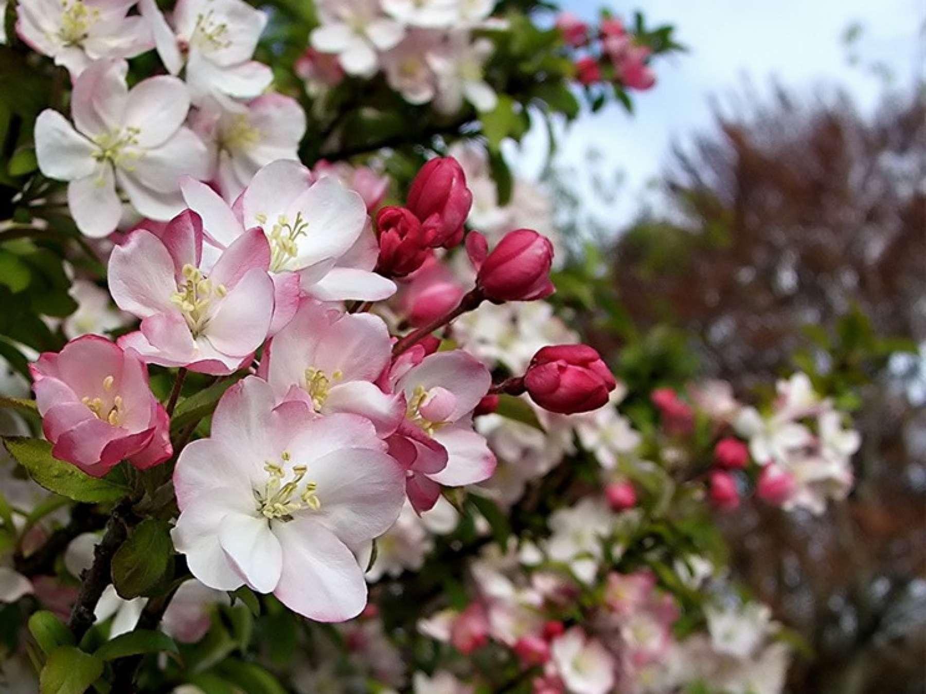 Красивые цветущие деревья во сне